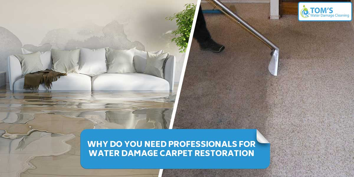Why Do You Need Professionals for Water Damage Carpet Restoration